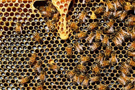 beneficiile produselor apicole